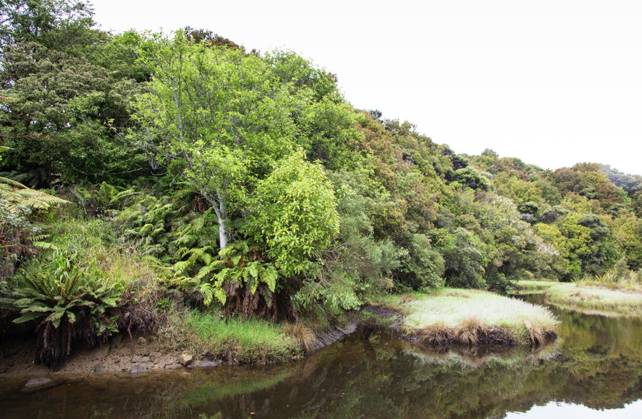 Property For Sale in Stewart Island